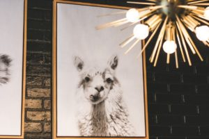A picture of a lama and a light fixture