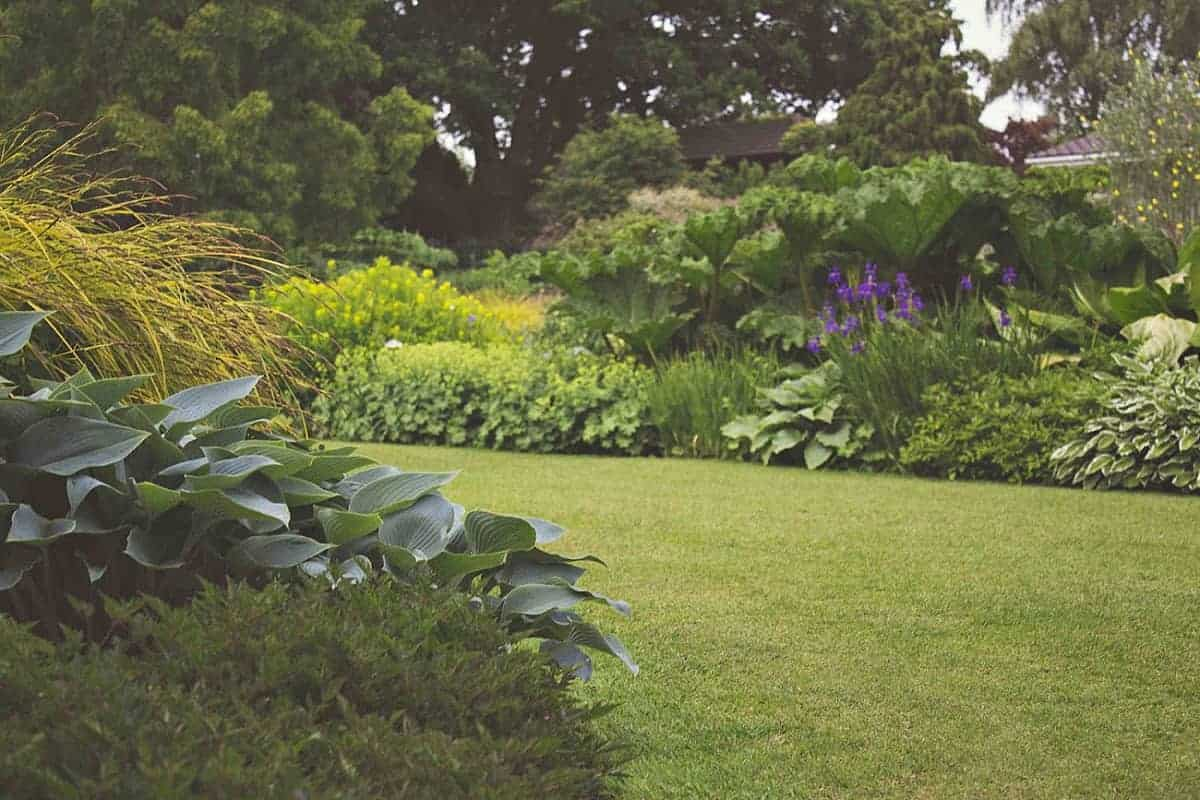 Tidy lawn and flowering perennials improve your homes appeal