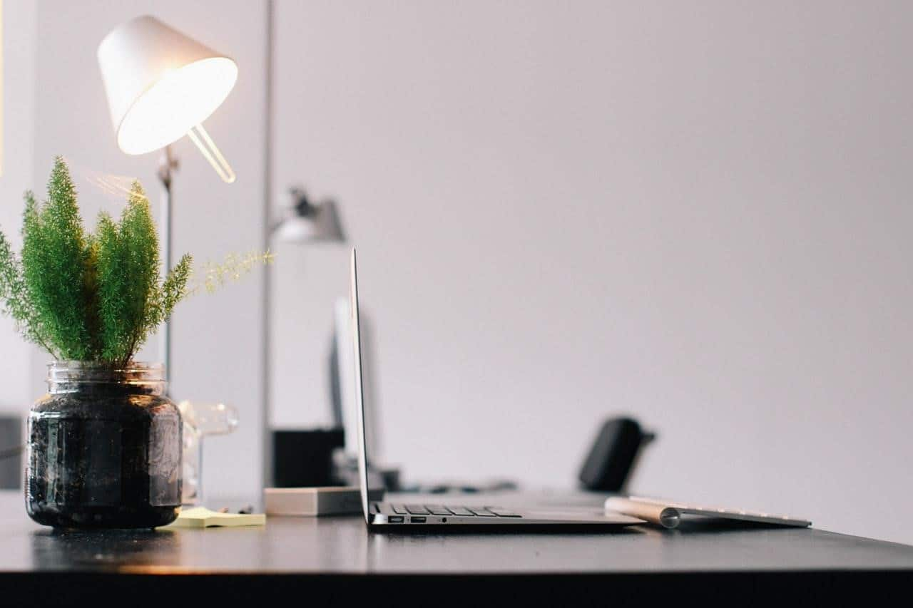 a white shade table lamp behind a plant next to a laptop
