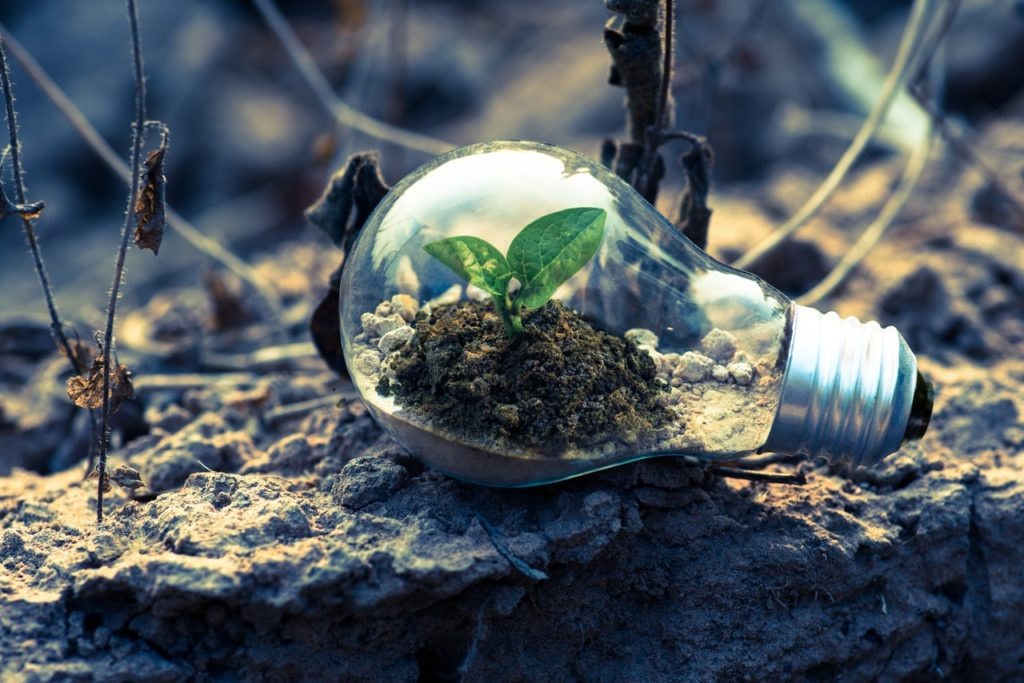 a clear lightbulb with earth and a plant inside it