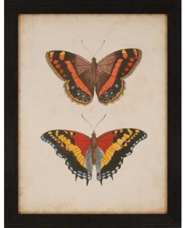products-antique-butterfly-iv-framed-wall-art-b_4743__86877.1489171387.1280.1280